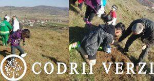 Codrii Verzi si elevi din Pitesti si Mioveni - impadurire 2017