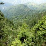 Padure romaneasca din zona montana